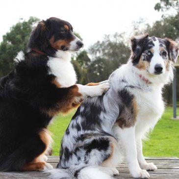 Höstlovsspecial – Barnmassage